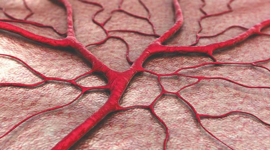 Blood Vessels: A Network that Fuels Your Entire Body