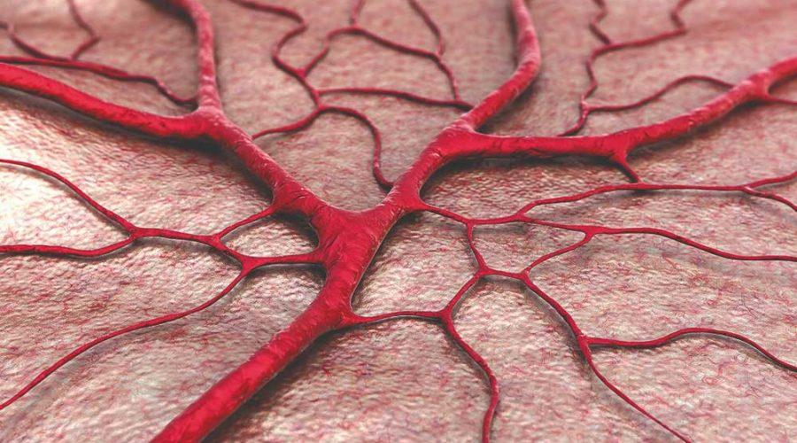 blood vessels network